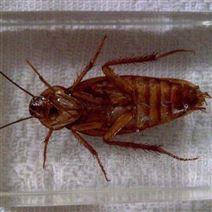 济南昆虫蟑螂微波干燥设备厂家