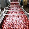 厂家直销连续式喷淋红枣清洗机
