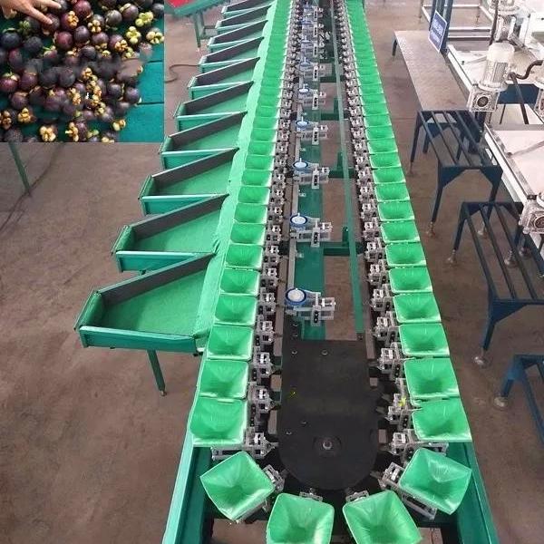 梨分选大小的机器 南国梨选果机厂家出品