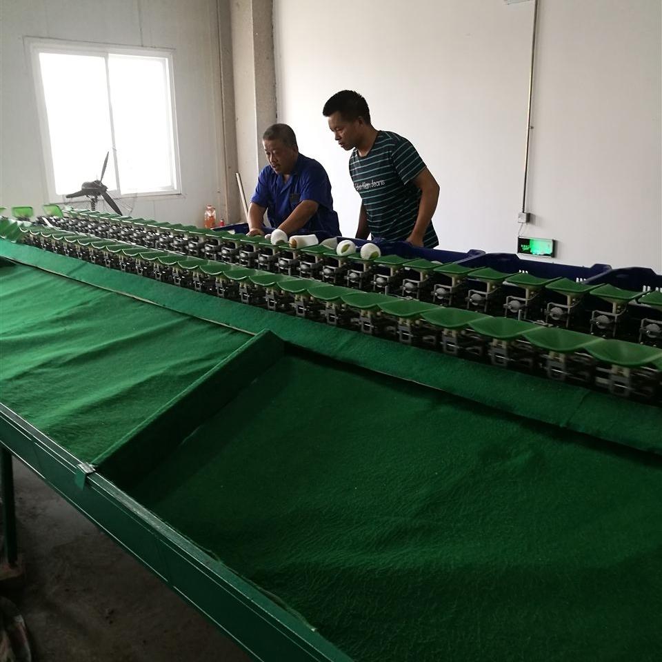 广西芭乐分选机番石榴分级设备多种果蔬分拣