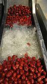 草莓连续式清洗机
