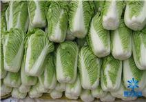 蔬菜保鮮冷庫如何建造的價格多少