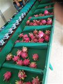 不傷鱗片的火龍果選果機 水果分大小的機器