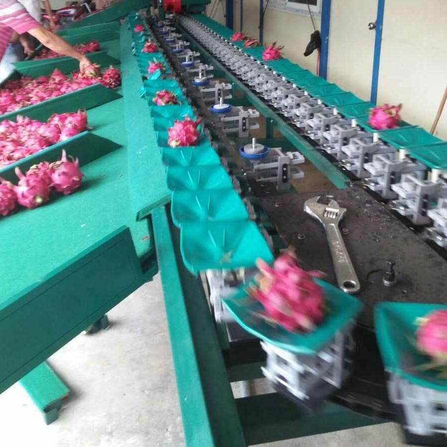 广西火龙果分大小用的机器 重量选果机