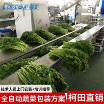 热销自动蔬菜包装机