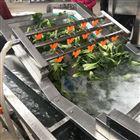 凈菜加工自動化清洗設備-芹菜清洗機