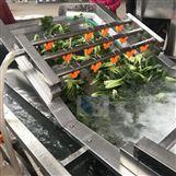 大型油菜清洗机-美康净菜加工设备热销款