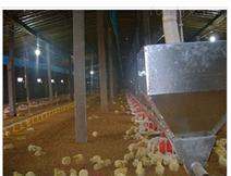 商品肉鸡平养自动料线