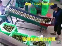 奇异果选果机 小型猕猴桃筛选机