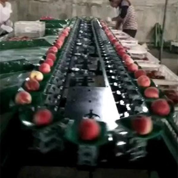 浙江桃子分选机厂家 不伤果皮重量选果机