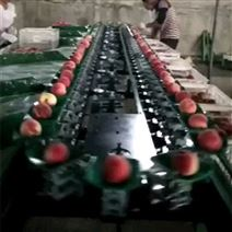 台湾桃子分選機廠家 不傷果皮重量選果機