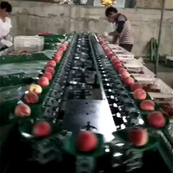 山西新绛县2千多个大棚 求购油桃分选线