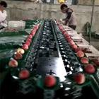 XGJ-SZ山西新绛县2千多个大棚 求购油桃分选线