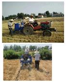 玉米小区播种机两行条播机