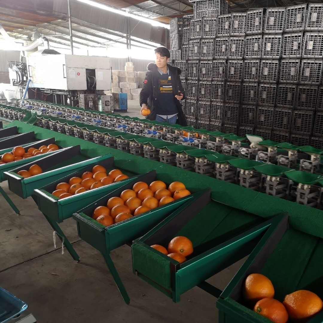 福建平和红柚分选机 葡萄柚分拣机