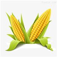 鲜食糯玉米加工设备-玉米护色机