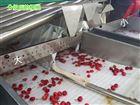 6XY-2烟台大樱桃预冷包装机 新型樱桃选果机