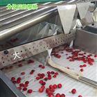 6XY-2河南大樱桃预冷机 新型樱桃选果机