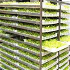 大批量黃花菜烘干設備廠家圣達