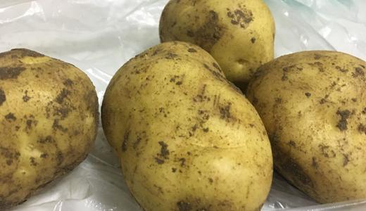 马铃薯主食化战略推进 生产设备还需提高节能性