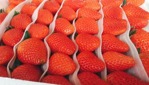 深加工設備為草莓產業帶來可持續發展解決之道