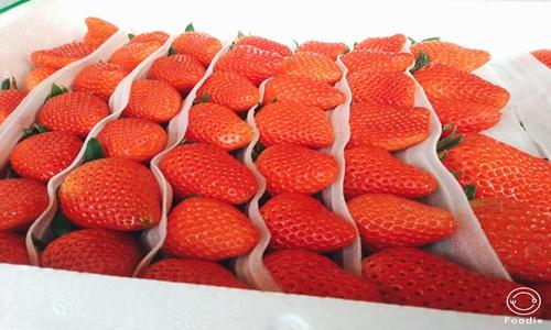 如何盤活草莓滯銷產業? 冷鏈裝備實現產業上行