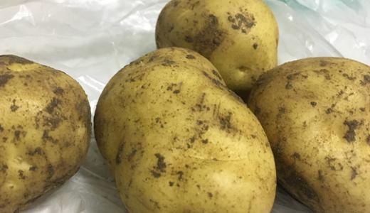 馬鈴薯主食化戰略穩步前進 技術難關還需加緊突破