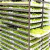大批量黄花菜烘干设备厂家圣达